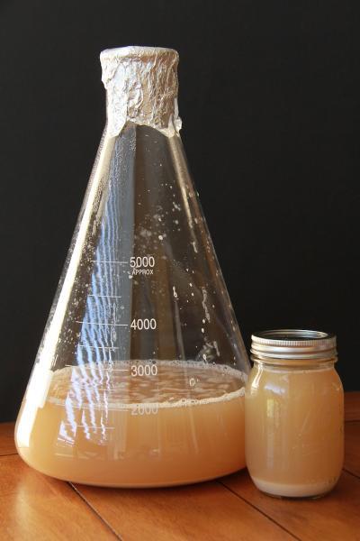 sklenice na kvasnice