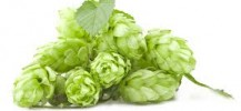 Suroviny pro výrobu piva